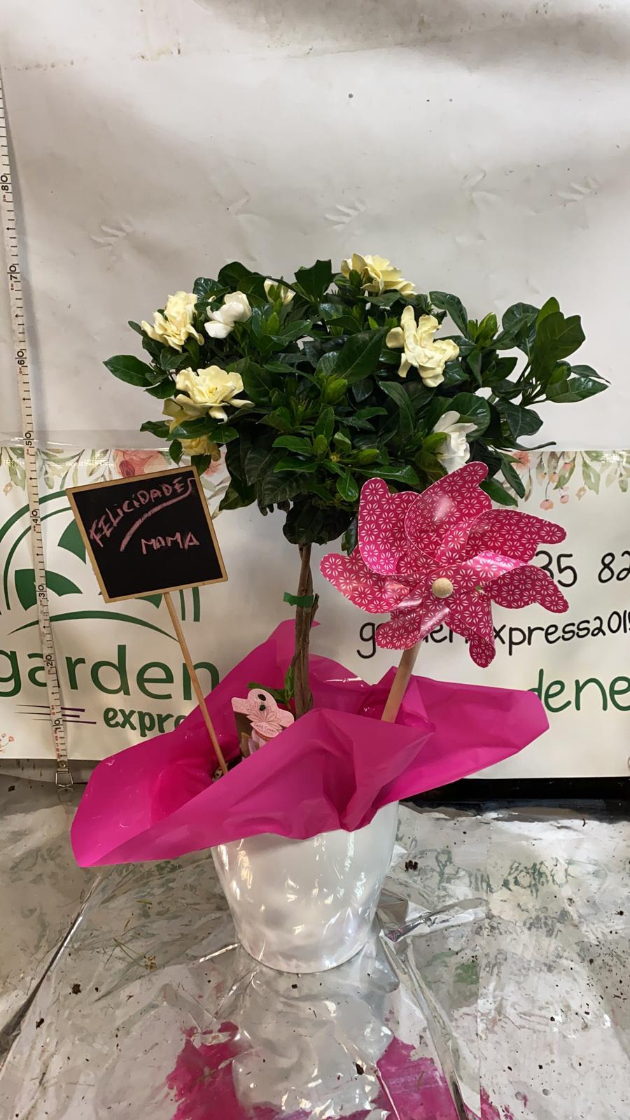 Composición día madre Gardenia copa+macetero +pizarra +molinillo 29,95€ sin envío
