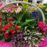 Composición de cestas de flores a partir de 28€
