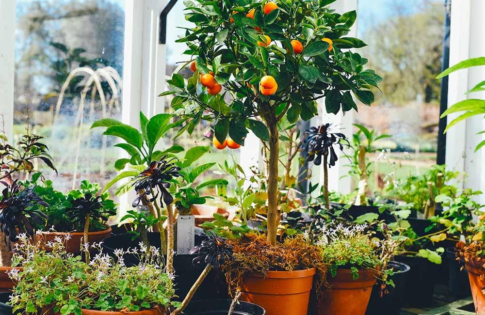 Arboles frutales para cultivar