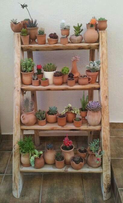 Los cactus no necesitan apenas cuidados para vivir.