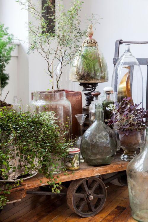 El éxito de un buen terrario empieza por saber escoger las especies vegetales adecuadas