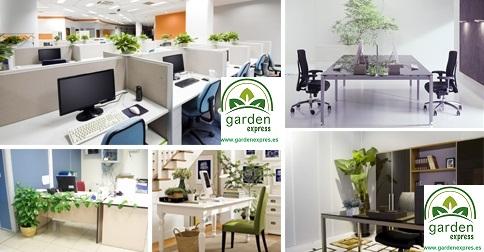 Tener plantas en la zona de trabajo ayuda a mejorar el rendimiento