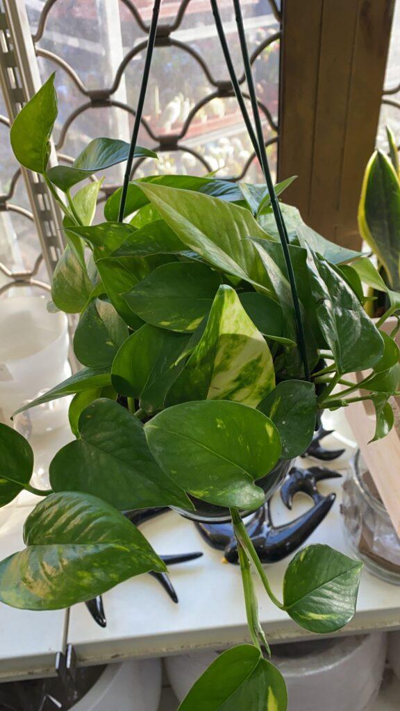 ¿Quién dijo que las plantas son para mamá? Aquí te proponemos alternativas para todo tipo de padres